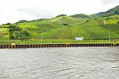 picture of moselle  - Moselle riverbank and vineyards on green hills Germany - JPG