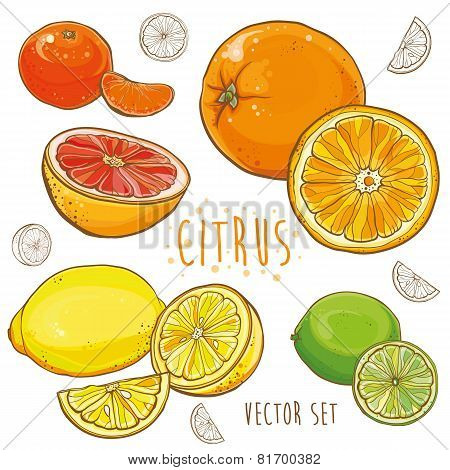 Vector Set With Citrus Fruits: Lemon, Lime, Orange, Tangerine, Grapefruit