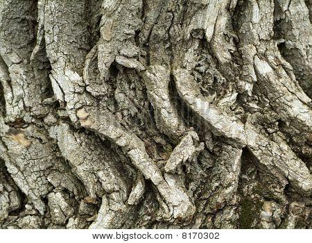 Fondo de textura de corteza de árbol de eco