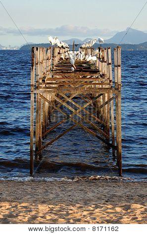 Worn Pier and Egrets