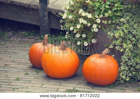 Pumpkins In The Garden.