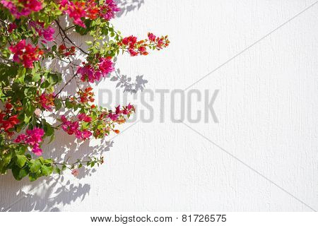 Red flowers agaist white wall good for background