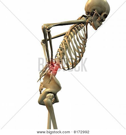 3d rendering of a human skeleton showing a person with back pain, Skeleton