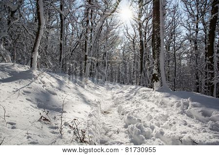 Snowy Footpath In Winter White Forest