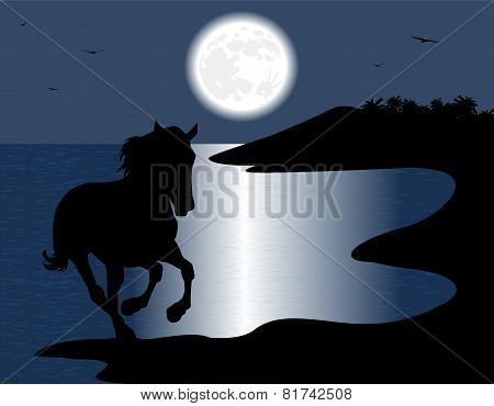 silhouette of the wild horse in the sea