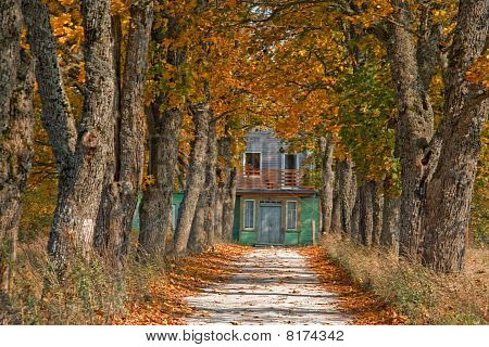 Autumn Road Leading To House