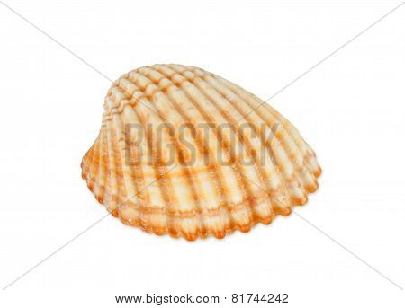 One Shell Isolated On White