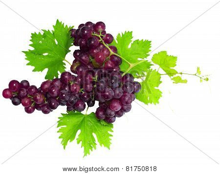 Branch Of Black Grapes With Green Leaf. Isolated