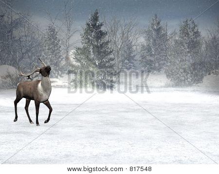 Winter wonderland, xmas