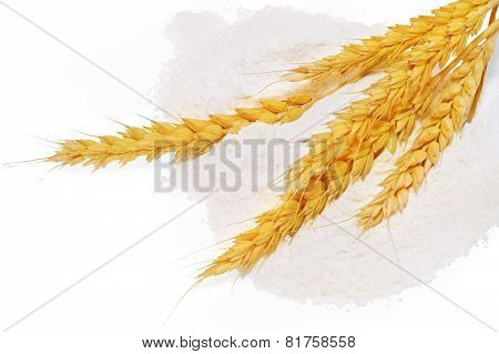 Spikelets Of Wheat On Flour Spillage.isolated.