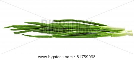Young Onion On White Background. Close-up. Isolated.