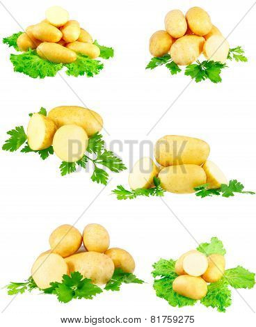 Collection Of Young Potatoes, Parsley . Isolated