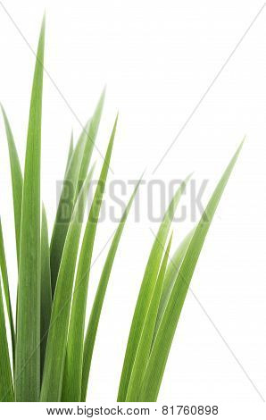 Green Grass Leaves