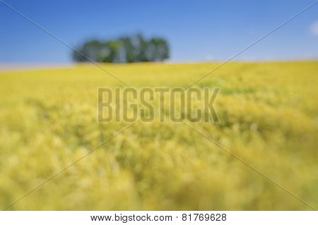 Summer Field With Golden Wheal Blured.