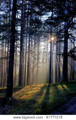 Morning Sun Beam In Forest