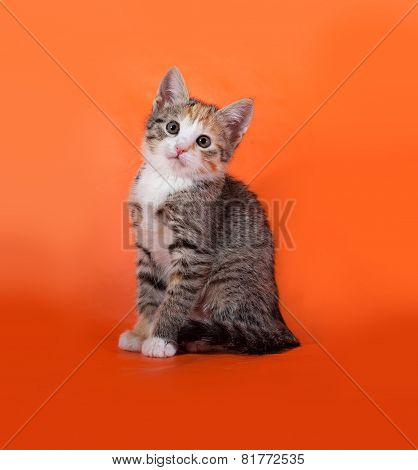 Tricolor Striped Kitten Sitting On Orange