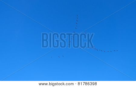 Geese flying in a blue sky in winter