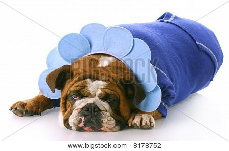 Dog Dressed Up Like A Flower