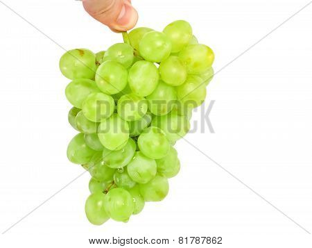 Branch Of Green Grapes In Hand . Isolated