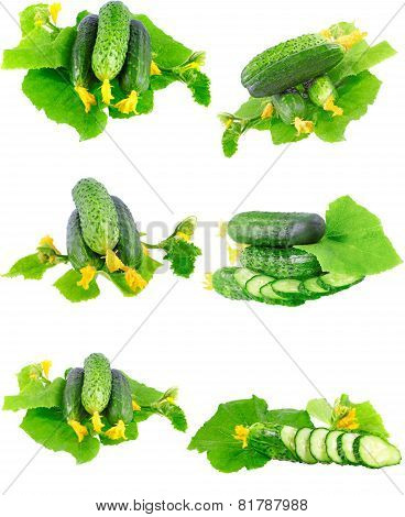 Collage  Of Cucumbers On White Background.