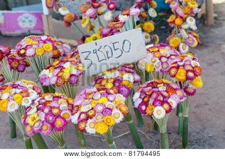 Helichrysum Bracteatum For Sale At Phu Tub Berk, Phetchabun Province, Thailand