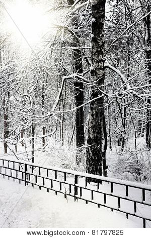Silent snow-covered urban park.