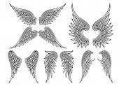 stock photo of spread wings  - Set of heraldic wings or angel wings drawn black lines - JPG