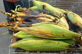 stock photo of corn  - Roasted barbecue corn  - JPG