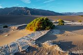 pic of mesquite  - Mesquite flat sand dunes at sunrise - JPG