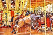 pic of carousel horse  - Carousel - JPG