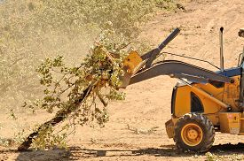 picture of backhoe  - Backhoe loading up brush following a cleanup of trees from a new commercial construction development - JPG