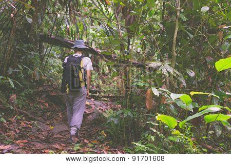 Backpacker Exploring Borneo Rainforest