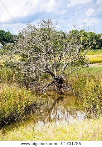 Winter Tree In Marsh Under Stormy Skies