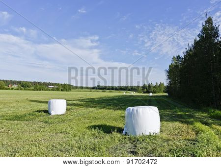 White balls of silage on a meadow.