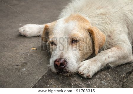Homeless Dog Sleeping