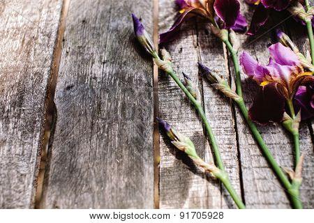 Gentle Violet Irises Flowers On Wood Table