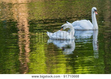 Swan Lake Park Pond