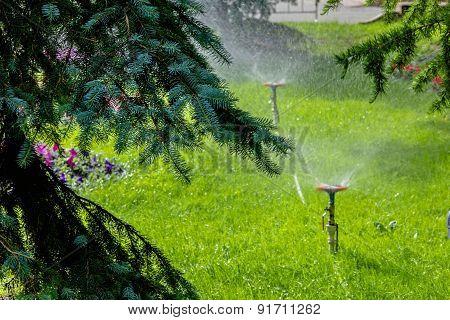 Sprays Of Water In Garden