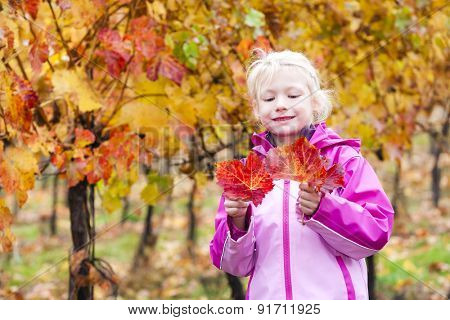 Little girl in autumnal vineyard
