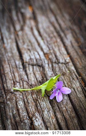 Fresh Violet Flower