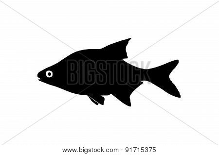 Silhouette Of The Fish Bream