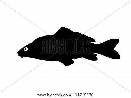Silhouette Of The Fish Carp
