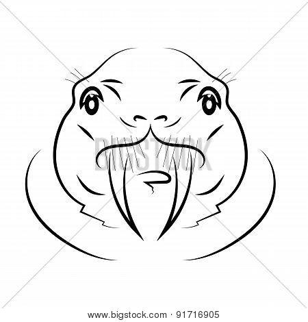 Walrus Head