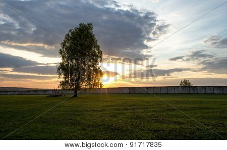 Lonely Tree In A Field At Sunrise