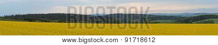 Panorama in spring