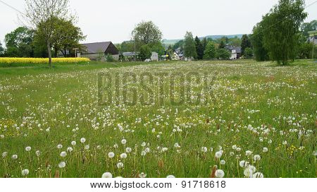 Meadow at edge of a village