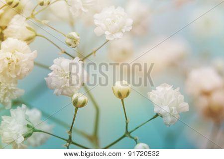 White flower on blue background. Soft focus.