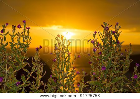 Wild Flowers Coastal Sunset