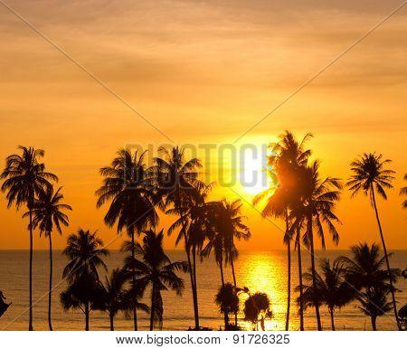 Coconut Horizon Tree Silhouettes