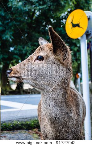 Deer With A Sign Of Itself